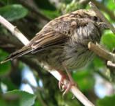 Cornwall-roseland-naturenotes4