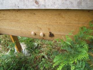 cornwall-roseland-beekeeping-5